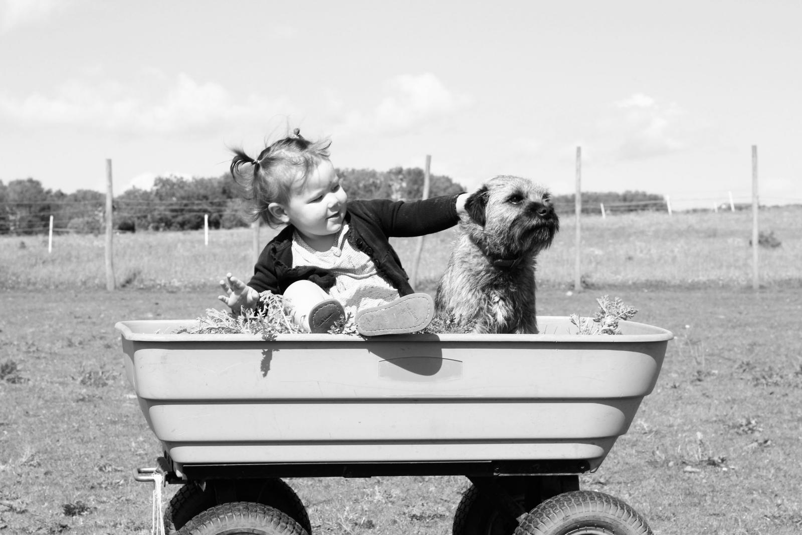 1600-pexels-animal-dog-photo-48672