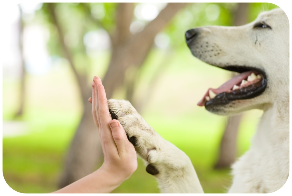 pes dává pac